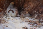 Alan B Hayman print Grey Partridge