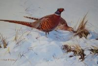 Alan B Hayman pencil signed print Pheasants