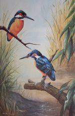 John Lewis Fitzgerald pencil signed print Kingfishers