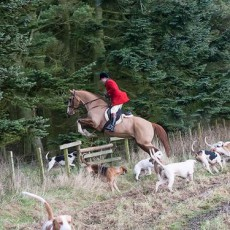 The Berwickshire Hunt