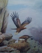 Richard Robjent Golden Eagles and young at their nest original pencil signed print