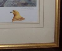 Richard Robjent Golden Eagles and young at their nest watercolour vignette