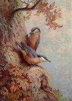 Archibald Thorburn Bird print Nuthatches